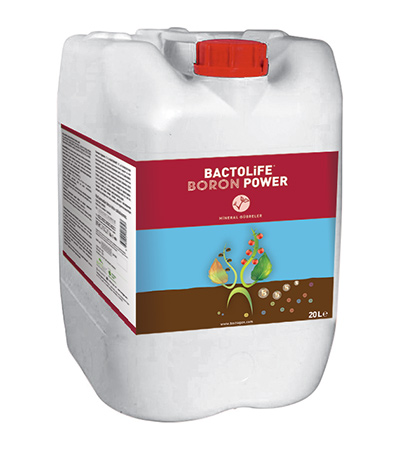 BACTOLIFE BORON POWER