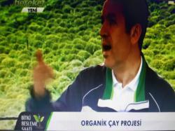 Organik Çay Projesi-4