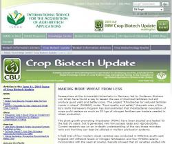 Crop Biotech Update-Making More Wheat From Less