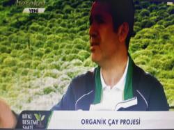 Organik Çay Projesi-1