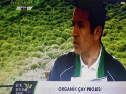Organik Çay Projesi-3